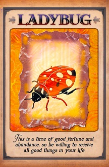 messages-from-your-animal-spirit-guides-ladybug